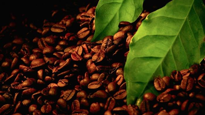 macro, coffee beans, leaves