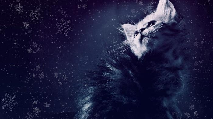 snowflakes, snow, kitten, animals