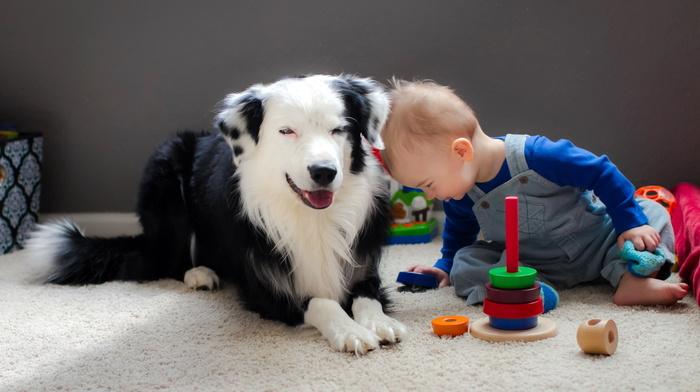 stunner, mood, dog