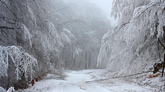 снег, дорога, лес, зима