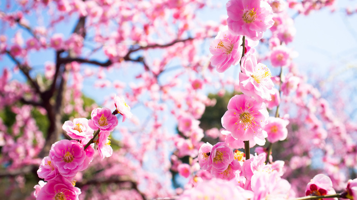 tree, bloom, nature, twigs, flowers