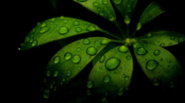 nature, green, black, water, dew, leaf, minimalism