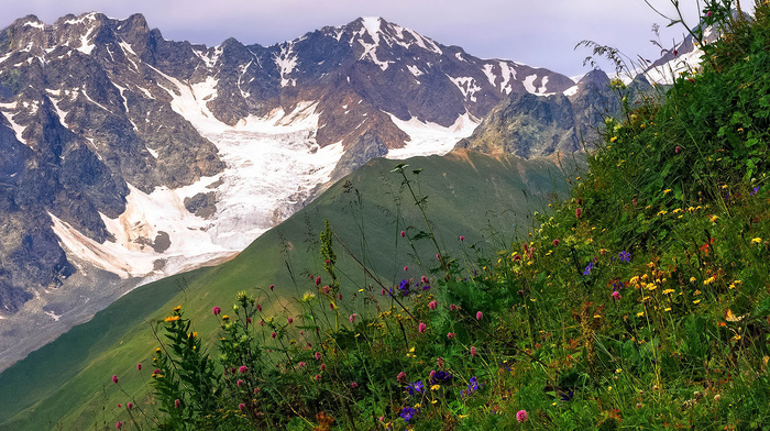 mountain, flowers, nature, grass, snow