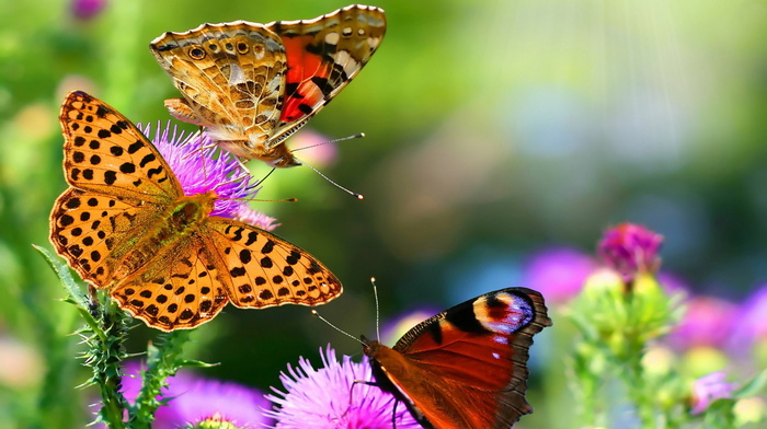 butterfly, nature, mood, background, flowers, summer