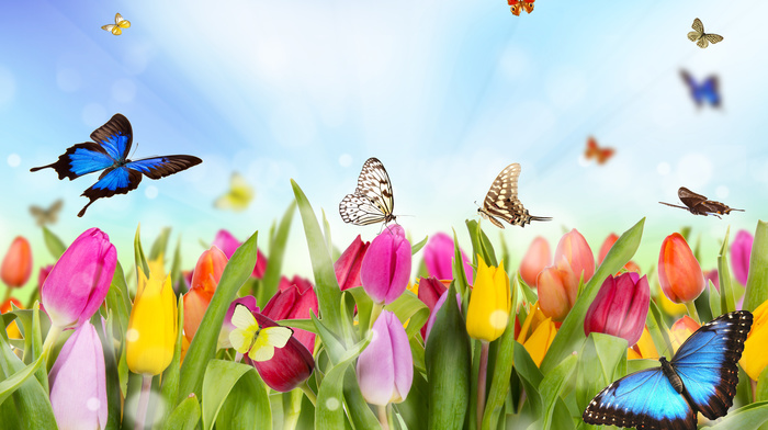 beautiful, photoshop, spring, tulips, flowers