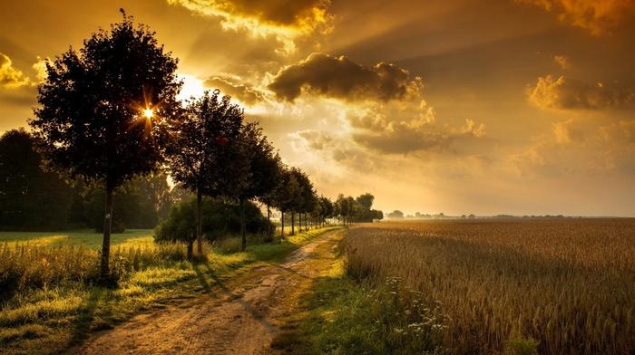 Clouds Sunlight Sky Path Orange Field Trees Shadow