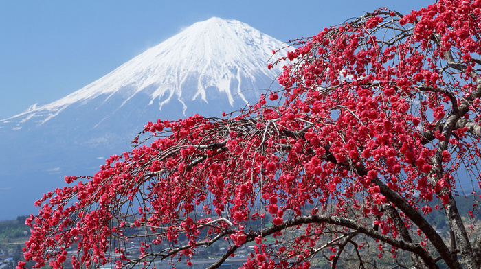Japan, tree, city, river, flowers, nature, sakura, spring, sky, photo, mountain