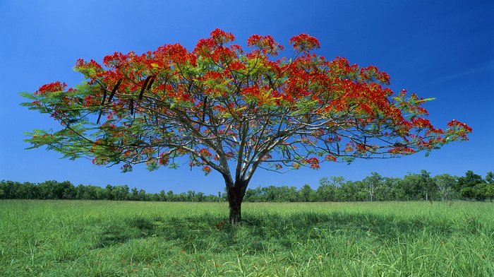 flowers, trees, grassland, nature, sky