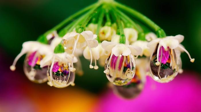 macro, flower, water, drops