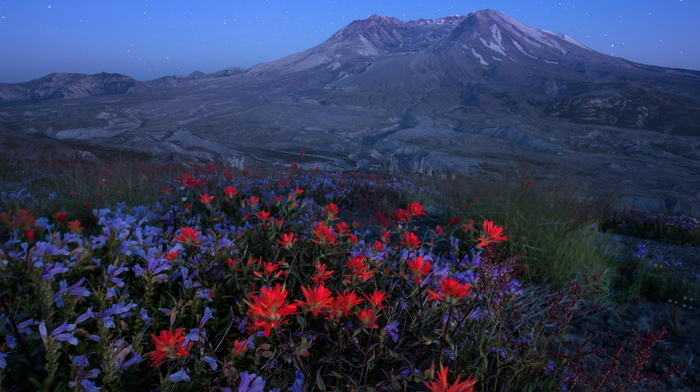 nature, evening, grassland, sky, flowers, mountain, volcano, stars