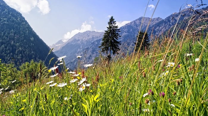 forest, sky, Alps, grassland, clouds, chamomile, nature, flowers, summer, mountain