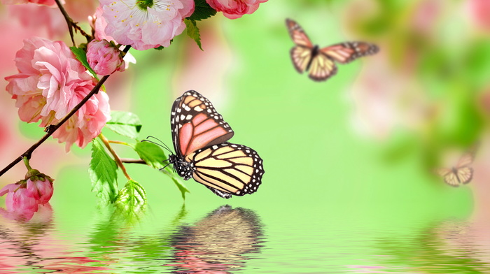 photoshop, flowers, twigs, water, sakura, spring