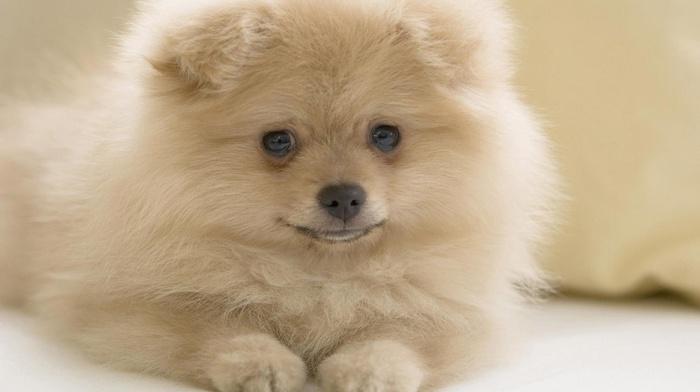 puppy, stunner