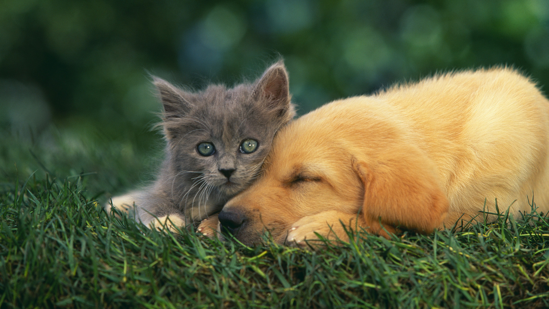 Cat amp Dog Wallpapers Pictures Images