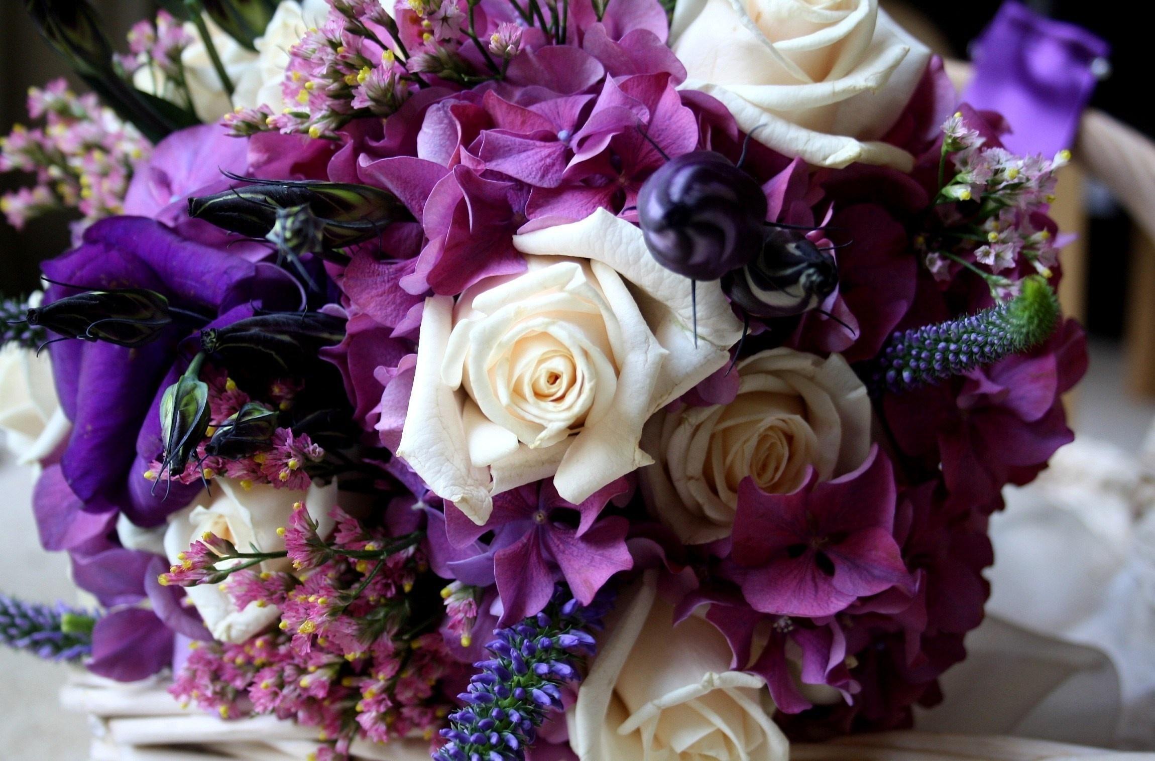 Purple Color Flower Flowers Roses Wallpaper 83784