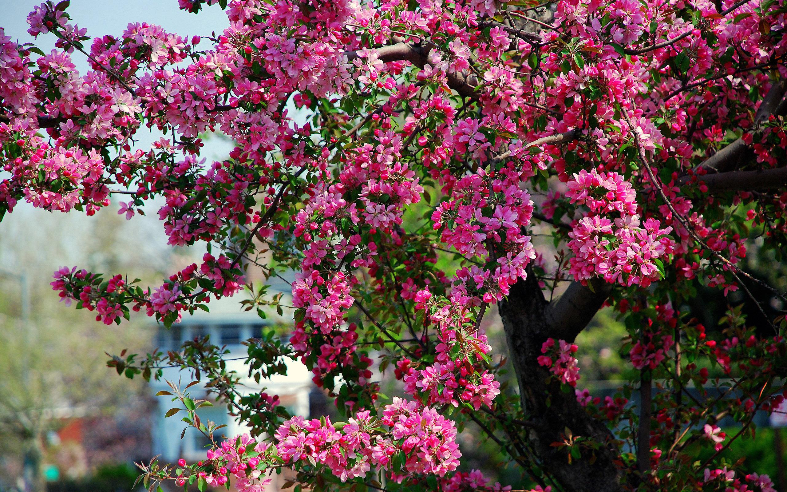 Большие деревья  с цветами 127
