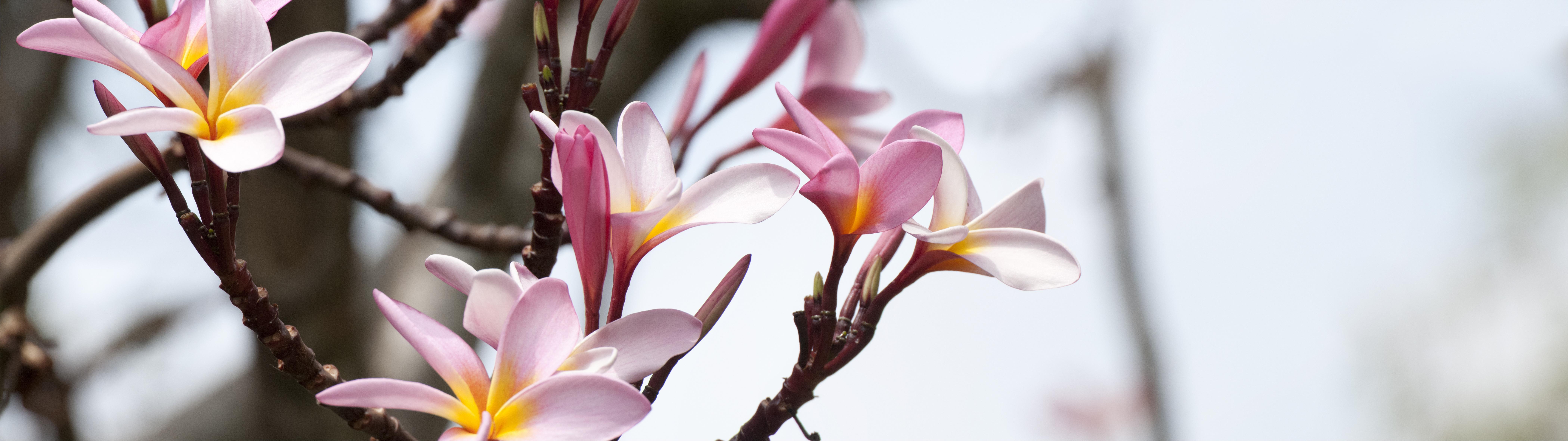 Панорамное фото цветы в высоком разрешении