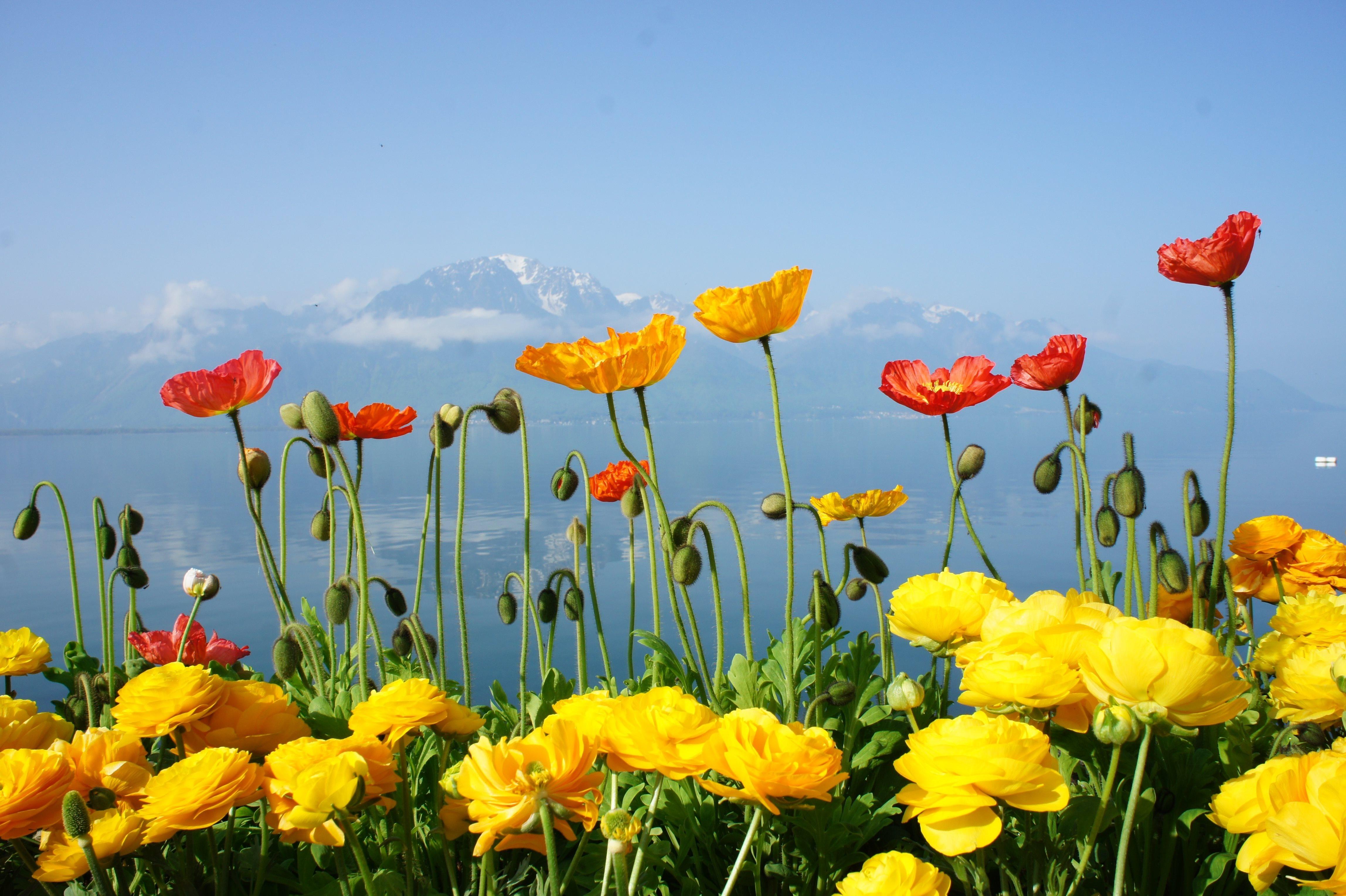 Spring Switzerland Lake Flowers Mountain Wallpaper 108429