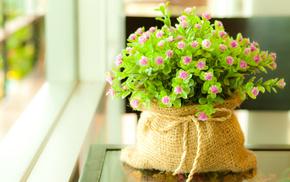 flowers, plant, greenery, leaves, macro