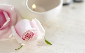 flowers, candle, tenderness, rose, flower