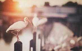 солнечный свет, глубина резкости, фильтр, птицы