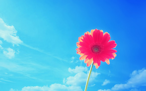 flowers, flower, summer, sky, nature