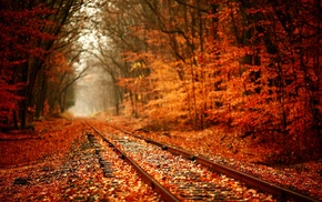 railway, nature, fall, forest