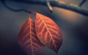 макро, глубина резкости, листья, природа