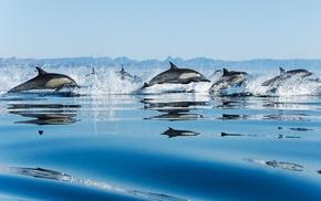 speed, sea, splash, drops, animals