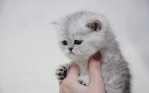 kitten, hand, animals