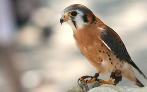 bird, predator, animals