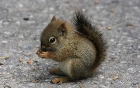 squirrel, kid, animals