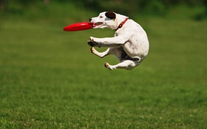 plate, animals, bounce, dog