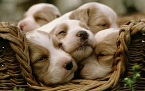 puppies, animals