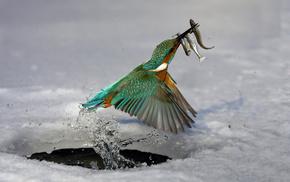 bird, water, animals, ice