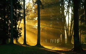 trees, nature, forest, twigs, sunlight