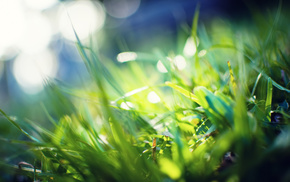 background, greenery, rays, grass, macro