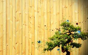 tree, minimalism, inscription