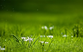 greenery, flowers, nature, glade, plants