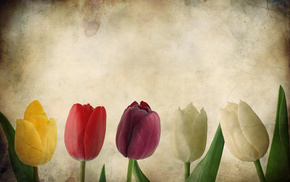 flowers, paper, tulips