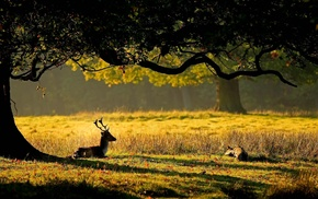 grass, deer, tree, animals, leaves