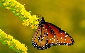 butterfly, animals, branch, flower, macro