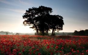 light, field, nature, Sun, trees