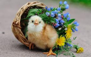 animals, flowers, bird