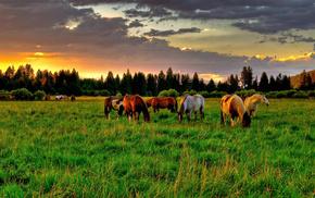 animals, horse, field, grassland, summer