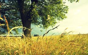 природа, Лето, дерево, поле, травы