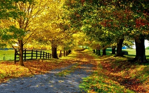 leaves, autumn, fence, road, nature