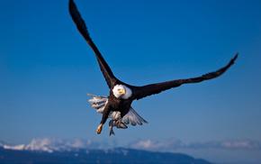eagle, fish, bird, animals
