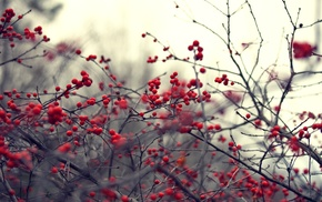 berries, nature, plant, twigs