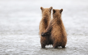 bear, animals